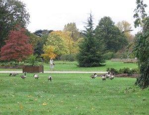 Kewo sodai – vienas iš didžiausių pasaulio parkų