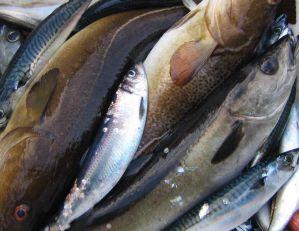 Apie mėgėjišką žvejybą Anglijoje