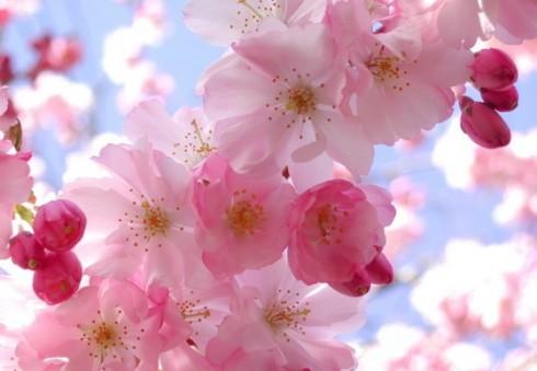Pavasaris [skaitytojos eilėraštis]