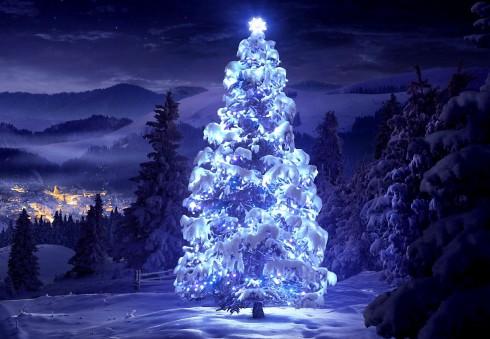 Išrink gražiausią 2015 metų kalėdinę eglutę!