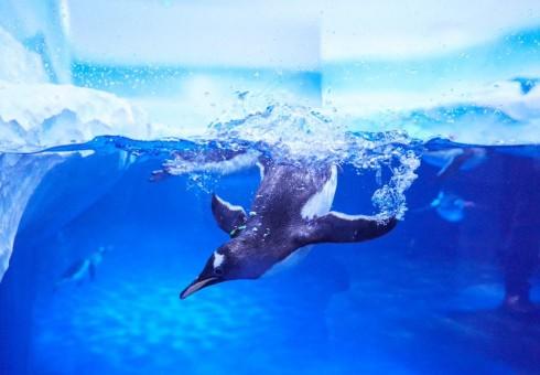 Antarktidos pingvinai jau laukia jūsų Londone!
