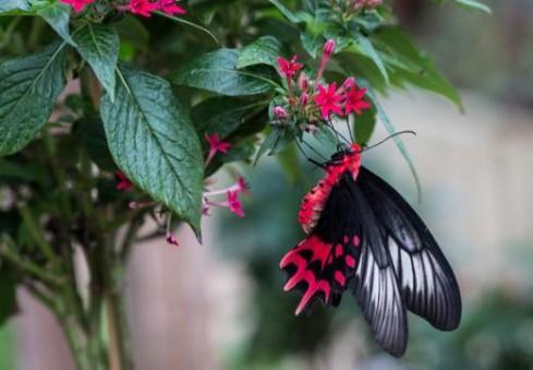 Londone – gražiausi pasaulio drugeliai tik jūsų akims