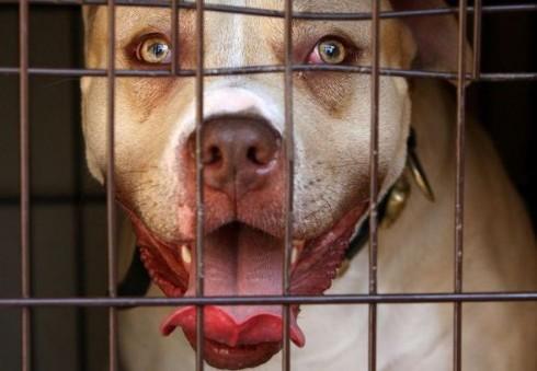 Ką reikia žinoti Anglijoje auginant šunį, kad jis nebūtų atimtas?