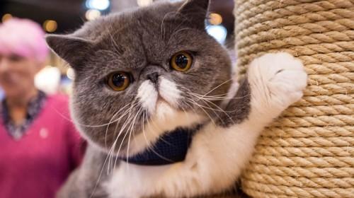 Gyvūnų mylėtojai Londone rinksis į nacionalinę gyvūnų mugę