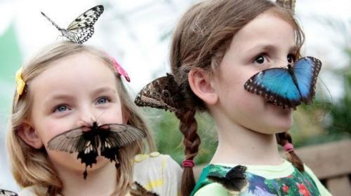 Londone – margaspalvių drugelių paroda