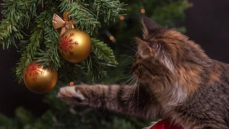 Kalėdinis konkursas JK lietuviams: už gražiausią eglutę – prizai!