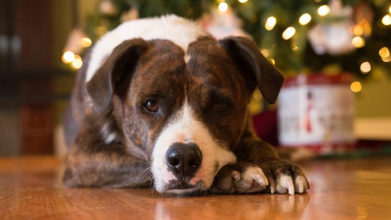 Lietuvos gyvūnų prieglaudoms reikalinga jūsų finansinė parama