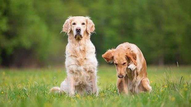 Turtuolių pora iš Londono ieško šunų prižiūrėtojo, kuris gyventų kartu
