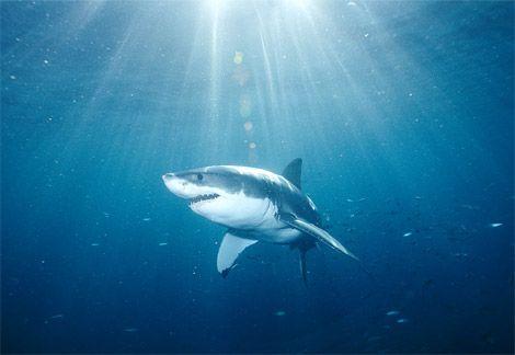Australijos pakrantėje įrengtame plaukimo baseine sugautas ryklys