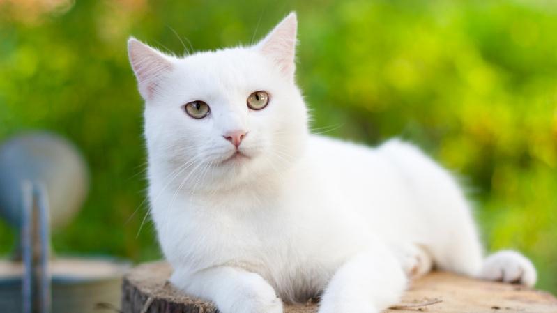 JK pirmą kartą koronavirusas oficialiai diagnozuotas ... katinui