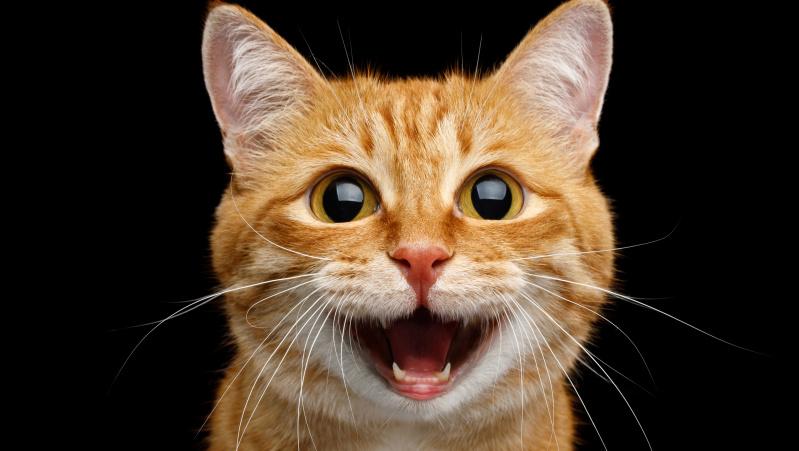 """JK lietuvės košmaras: tautietei prižiūrėti palikta katė dingo, atostogos """"nuplaukė"""""""