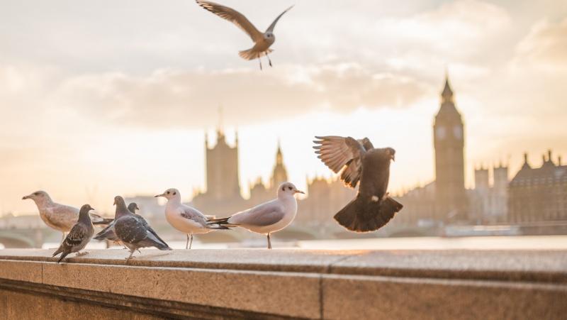 Londone – griežčiausi ketvirto lygio apribojimai