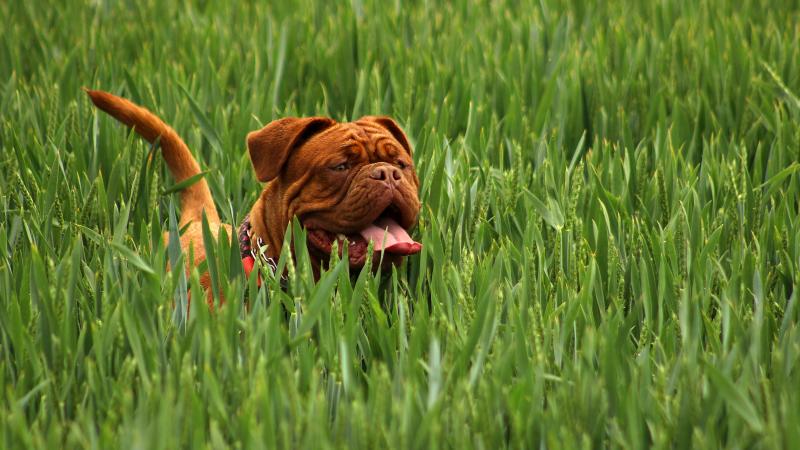 JK du šunys mirtinai sudraskė savo šeimininkę dėl ginčo su dukra