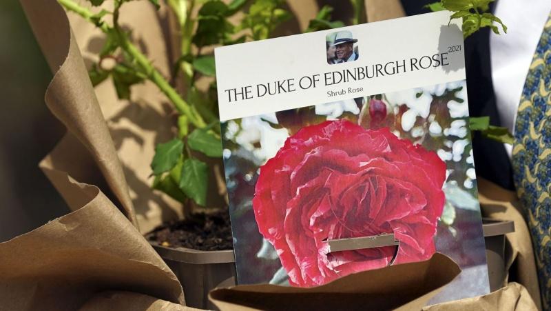 Princo Philipo 100-čiui paminėti išvesta ir karalienei padovanota nauja rožė