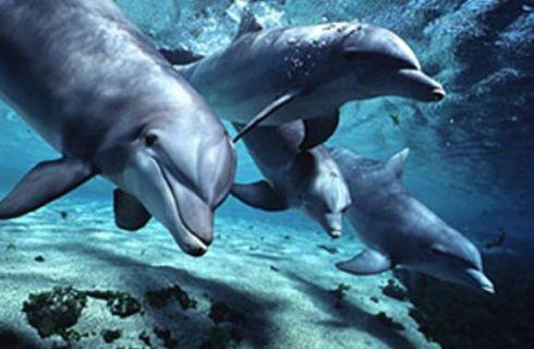 Jūrų muziejaus delfinariume - naujas gyventojas