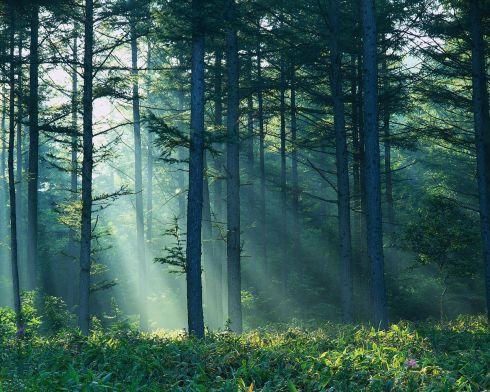 Miškuose dingsta grybautojai, randami lavonai